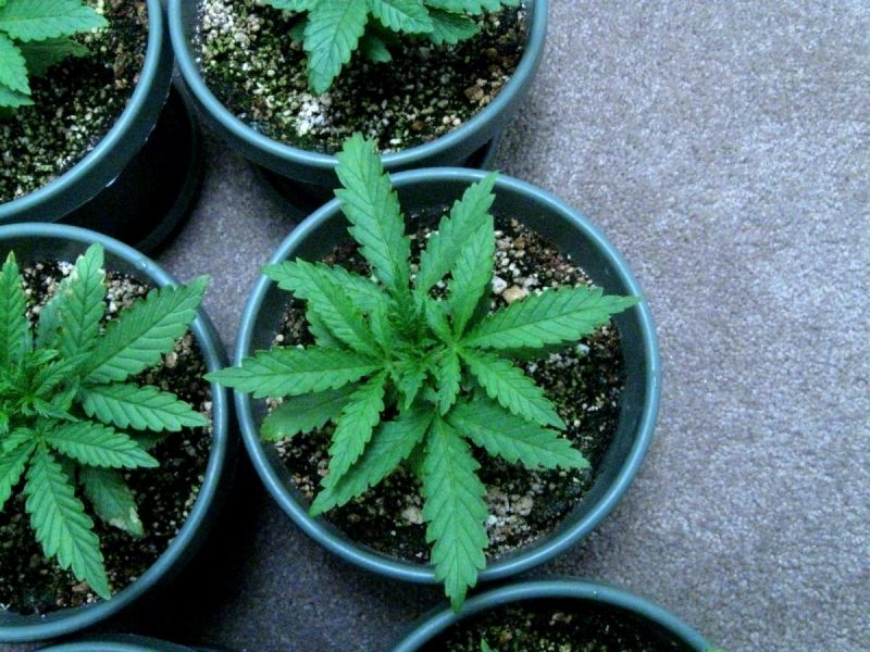 10 Mistakes to Avoid When Growing Weed Indoors